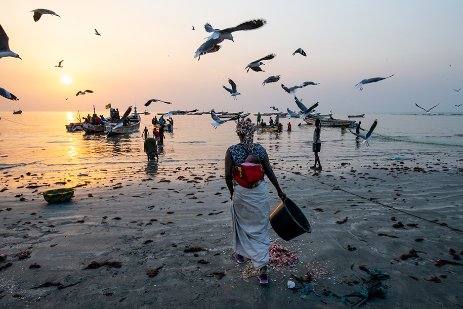 Woman working at the Fish market in Tanji, with her baby on her back. Nice sunset lighting and seagulls flying all around. Ellis work photography.
