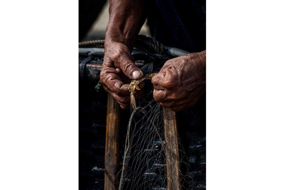 Close up of hands carefully removing a crab from the fishing nets. A fisherman from Da Nang, Vietnam. Travel Photography