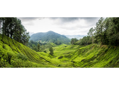 Green tea plantation in Malaysia. The Cameron Highlands. Panorama landscape photography by Ellis Peeters.