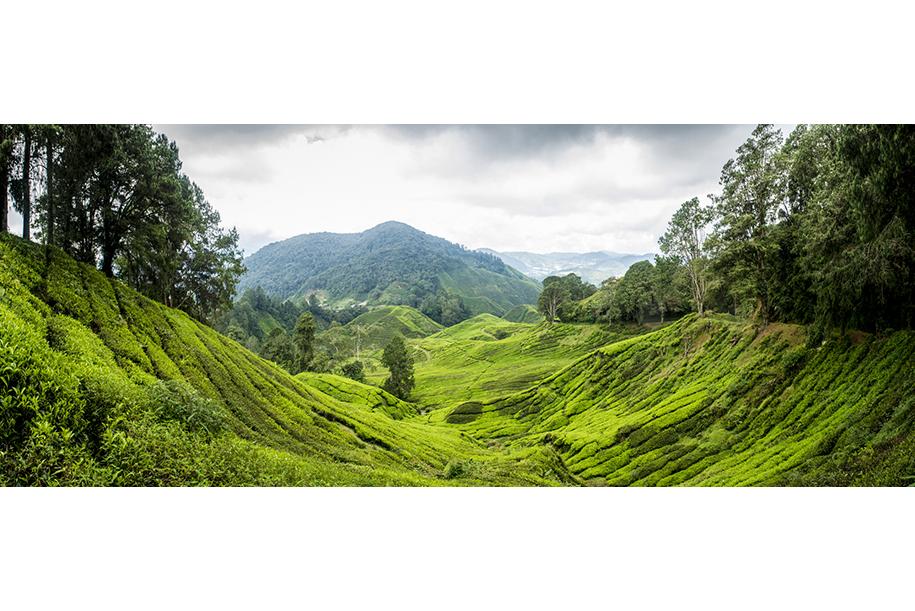 Cameron Highlands, tea plantation Malaysia