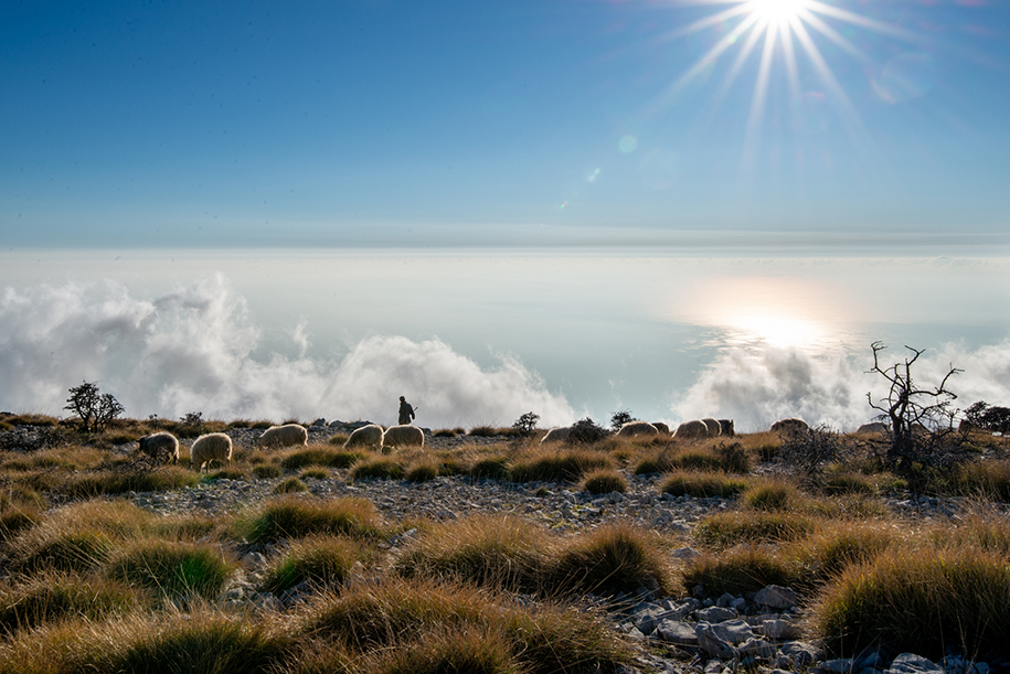 A shepherd walks with his sheep on top of a mountain, above the clouds. Bright sunshine. Ellis Work Travel Photography